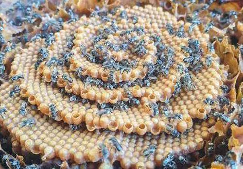 Native Australian Honey